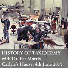 history of taxidermy at Carlyle's House